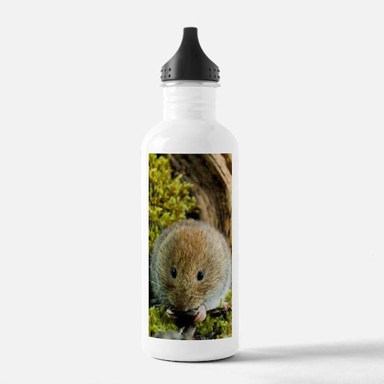 Bank vole Water Bottle