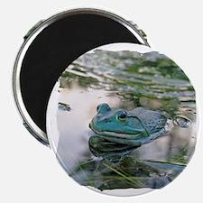 Bullfrog Magnet