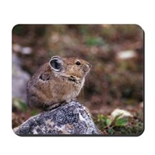 Pika sitting on rock Mousepad