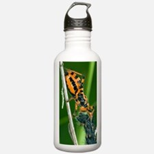 Assassin Bug Water Bottle