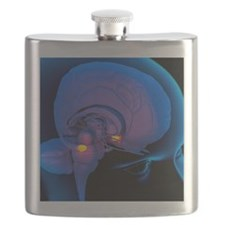Amygdala in the brain, artwork Flask