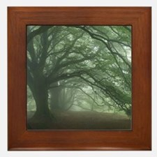 Ancient Beech woodland Framed Tile