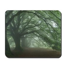 Ancient Beech woodland Mousepad