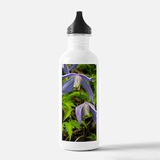 Alpine clematis (Clema Water Bottle