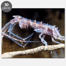 Amphipod crustacean Puzzle