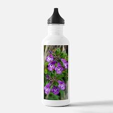 Alpine Basil-thyme (Ac Water Bottle