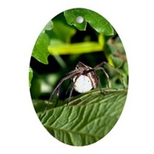 A female Wolf spider with egg Oval Ornament