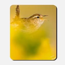 A singing Wren Mousepad