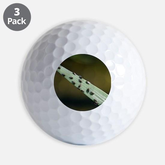Black Flies on reeds Golf Ball