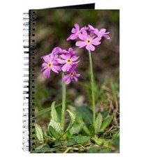 Bird's eye Primrose (Primula farinosa) Journal