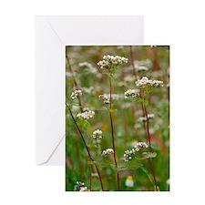 Buckwheat (Fagopyron esculentum) Greeting Card