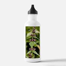 Alpine woundwort (Stac Water Bottle