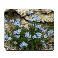 Alpine Forget-me-not (Myosotis alpestris Mousepad