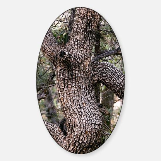 Alligator Juniper (Juniperus deppea Sticker (Oval)