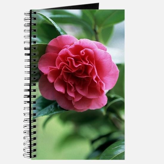Camellia flower Journal