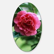 Camellia flower Decal