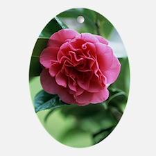 Camellia flower Oval Ornament