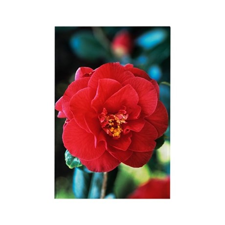 Camellia flower Rectangle Magnet