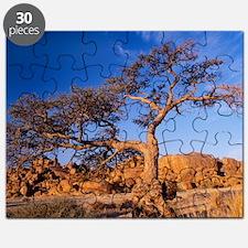 Camel thorn tree (Acacia erioloba) Puzzle