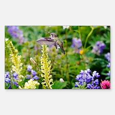 Calliope Hummingbird Decal