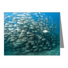 School of fish Note Cards (Pk of 10)