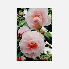 Camellia flowers (Camellia japoni Rectangle Magnet