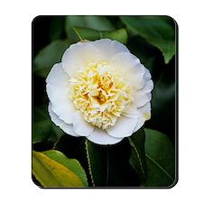 Camellia flower Mousepad