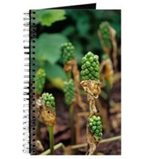Calla lily seed heads Journal