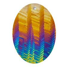 Caffeine crystals, light micrograph Oval Ornament