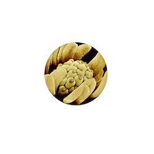 Buttercup flower, SEM Mini Button
