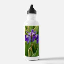 Butterfly iris (Iris s Water Bottle