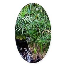 Bulrush (Cyperus papyrus) Decal