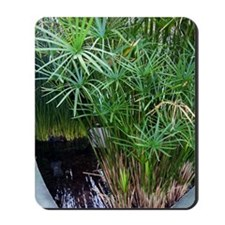 Bulrush (Cyperus papyrus) Mousepad