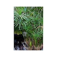 Bulrush (Cyperus papyrus) Rectangle Magnet
