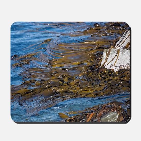 Bull kelp bed Mousepad