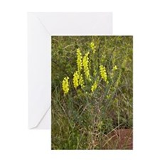 Broomleaf toadflax (Linaria genistif Greeting Card