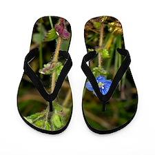 Breckland Speedwell (Veronica praecox) Flip Flops