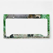 Borneo pygmy elephant License Plate Holder