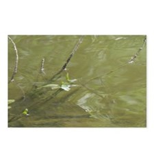 River Branches Postcards (Package of 8)