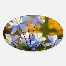 Blue Columbine (Aquilegia coerulea) Sticker (Oval)