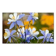 Blue Columbine (Aquilegia coer Decal
