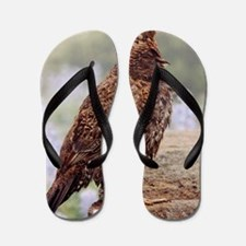 Blue Grouse Flip Flops