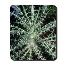 Blessed thistle plant Mousepad