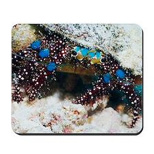 Blue-knee hermit crab Mousepad