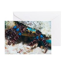 Blue-knee hermit crab Greeting Card