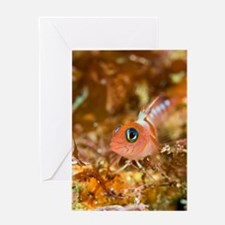 Blue-eyed triplefin Greeting Card