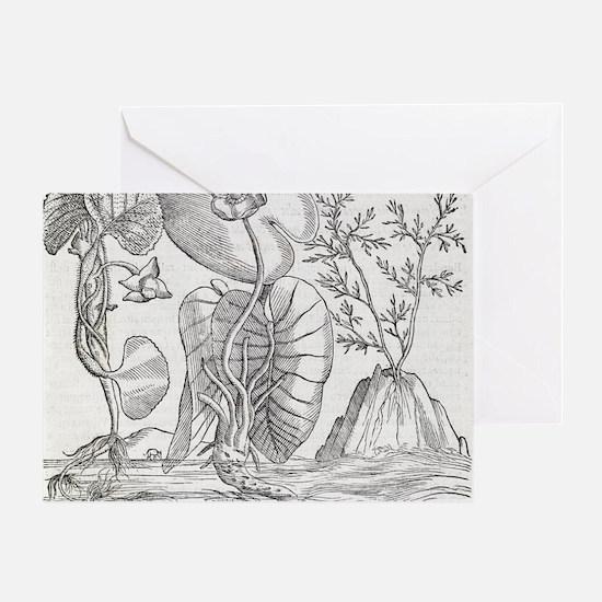 Aquatic plants, 16th century artwork Greeting Card