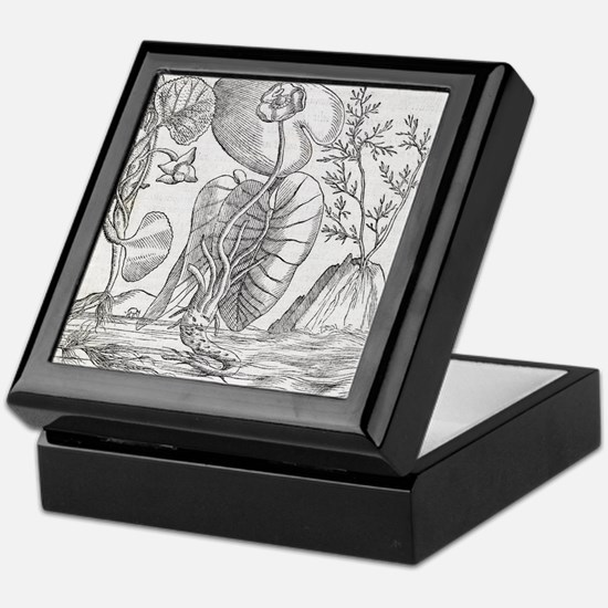 Aquatic plants, 16th century artwork Keepsake Box