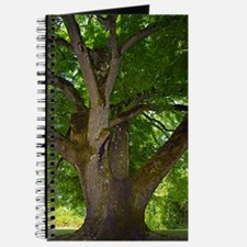 Black walnut (Juglans nigra) tree Journal