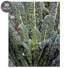 Black kale (Brassica 'Nero De Toscana') Puzzle